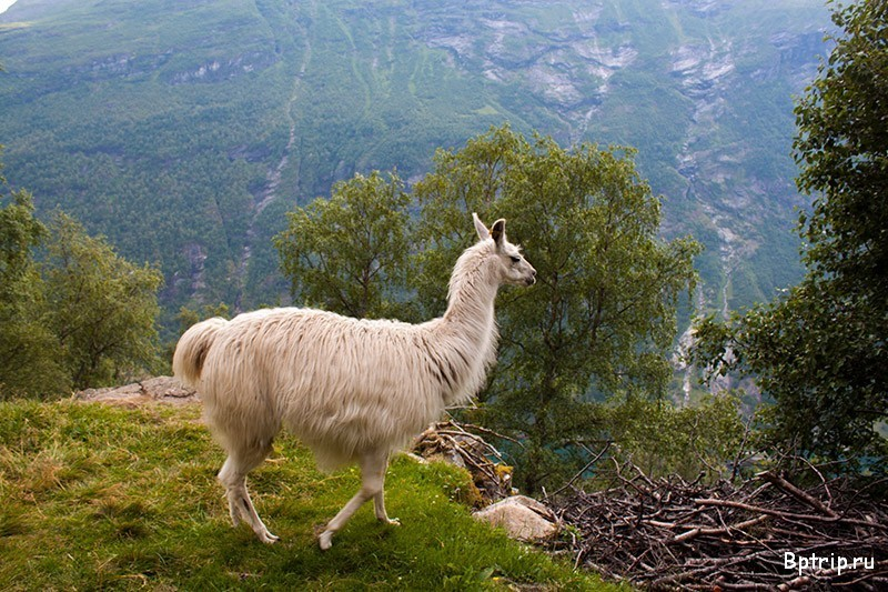 Туры в Норвегию: отдых в Норвегии в 2 16, цены на